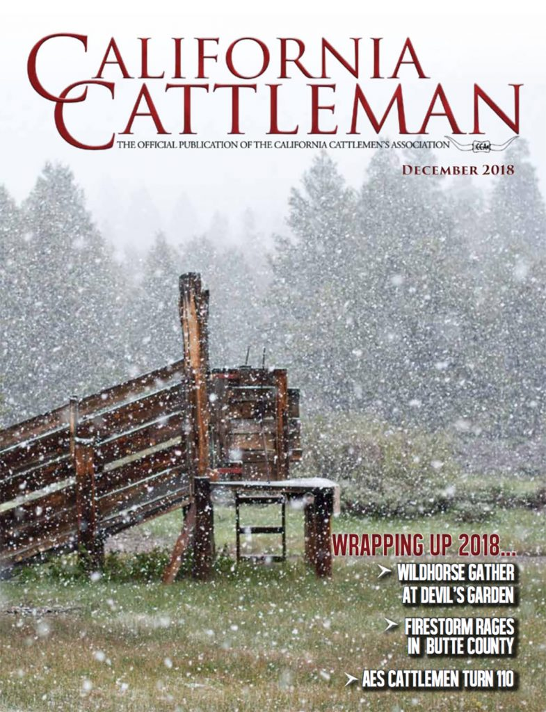 CCA Magazine December 2018