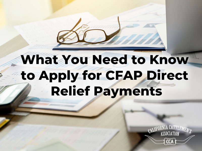 What You Need to Know to Apply for CFAP Direct Relief Payments